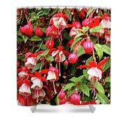 Fuchsia Pastel Shower Curtain