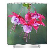 Fuchsia Cluster #6 Shower Curtain