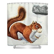 Fuertes, Louis Agassiz 1874-1927 - Burgess Animal Book For Children 1920 Red Squirrel Shower Curtain