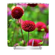 Full Bloom Reds Shower Curtain