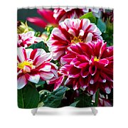 Full Blooms Shower Curtain