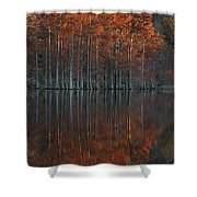 Full Of Glory - Cypress Trees In Autumn Shower Curtain