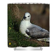 Fulmar Nesting On Cliff Shower Curtain
