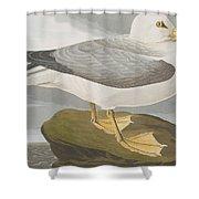 Fulmar Petrel Shower Curtain