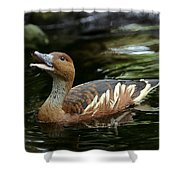 Fulvous Whistling Duck 2 Shower Curtain