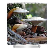 Fungi 1 Shower Curtain