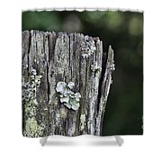 Fungi Green Shower Curtain