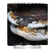 Fungi In Dew Shower Curtain