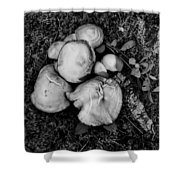Fungi No 4 Bw Shower Curtain