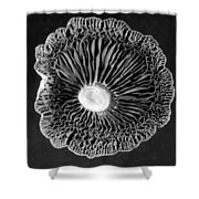 Fungi Two Shower Curtain