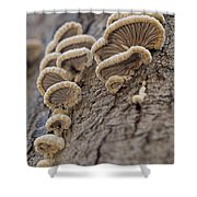 Fungui Growing On A Tree Trunk Shower Curtain