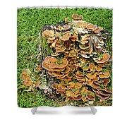 Fungus Bouquet Shower Curtain