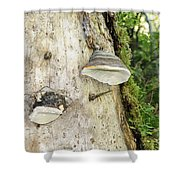 Fungus Grows On A Tree Trunk Shower Curtain
