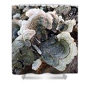 Fungus Shower Curtain