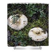 Fungi No 3 Shower Curtain