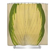 Funkia Sieboldiana Variegata Shower Curtain