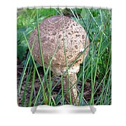 Funky Fungi   Shower Curtain