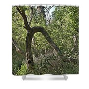 Funky Tree On Trail In Peters Canyon Shower Curtain