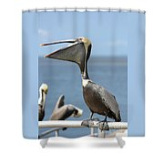 Funny Brown Pelican Shower Curtain