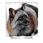 Funny Little Furry Face Shower Curtain