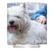Funny View Of The Trimming Of West Highland White Terrier Dog Shower Curtain