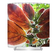 Furry Flora 2 Shower Curtain