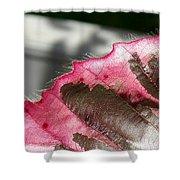 Furry Leaf Shower Curtain