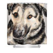 Furry Pooch Shower Curtain