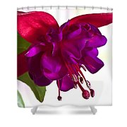 Fuschia Blossom Macro  Shower Curtain