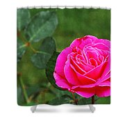 Fuschia Rose Shower Curtain