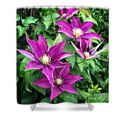 Fushia Clematis Flowers Shower Curtain