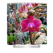 Fushia Orchid Shower Curtain