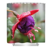 Fushia With Water Shower Curtain