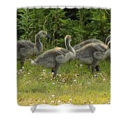 Fuzzy Fowlings Shower Curtain