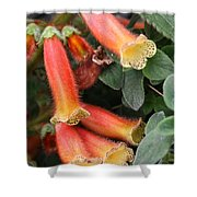 Fuzzy Temple Bells Shower Curtain