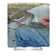 Fuzzy White Wing C Shower Curtain