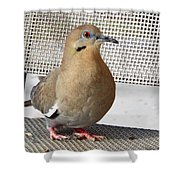 Fuzzy White Wing D Shower Curtain