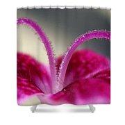 Fuzzzzz Shower Curtain