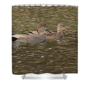 Gadwall Pair Shower Curtain
