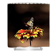 Gaillardia And Butterfly Shower Curtain