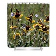 Gaillardia/blanket Flower Butterflies Shower Curtain by Roger Snyder