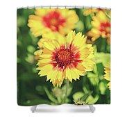 Gaillardia Flowers Shower Curtain