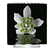 Galanthus Nivalis Flore Pleno Shower Curtain