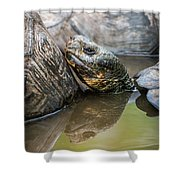 Galapagos Giant Tortoise In Pond Amongst Others Shower Curtain