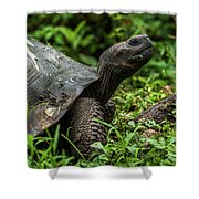 Galapagos Giant Tortoise In Profile In Woods Shower Curtain