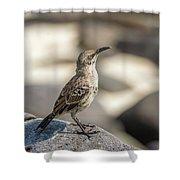 Galapagos Hood Mockingbirds Shower Curtain