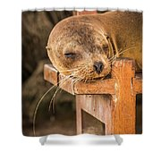 Galapagos Sea Lion Sleeping On Wooden Bench Shower Curtain