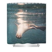 Galapagos Sealion Shower Curtain