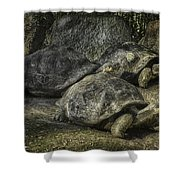 Galapagos Tortoise_hdr Shower Curtain