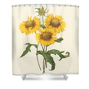 Galardia Shower Curtain